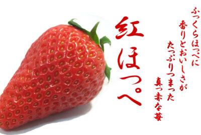 新春の苺フェア1月23日より